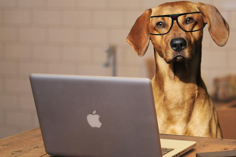 Will developing technology really let you talk to your dog?