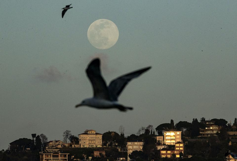 supermoon seagulls