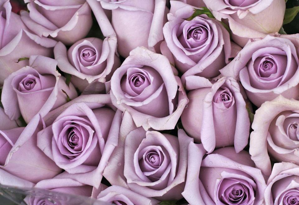 """<p>According to <a href=""""https://go.redirectingat.com?id=74968X1596630&url=https%3A%2F%2Fwww.proflowers.com%2Fblog%2Fhistory-and-meaning-of-lavender-roses&sref=https%3A%2F%2Fwww.goodhousekeeping.com%2Fholidays%2Fvalentines-day-ideas%2Fg1352%2Frose-color-meanings%2F"""" rel=""""nofollow noopener"""" target=""""_blank"""" data-ylk=""""slk:Proflowers"""" class=""""link rapid-noclick-resp"""">Proflowers</a>, this lavender shade of flower has a very specific, and romantic, meaning — love at first sight! </p><p><a class=""""link rapid-noclick-resp"""" href=""""https://go.redirectingat.com?id=74968X1596630&url=https%3A%2F%2Fwww.proflowers.com%2Fproduct%2FMulberry-Margarita--12-Stems-of-Purple-Roses-30262768&sref=https%3A%2F%2Fwww.goodhousekeeping.com%2Fholidays%2Fvalentines-day-ideas%2Fg1352%2Frose-color-meanings%2F"""" rel=""""nofollow noopener"""" target=""""_blank"""" data-ylk=""""slk:SHOP PURPLE FLOWERS"""">SHOP PURPLE FLOWERS</a></p>"""