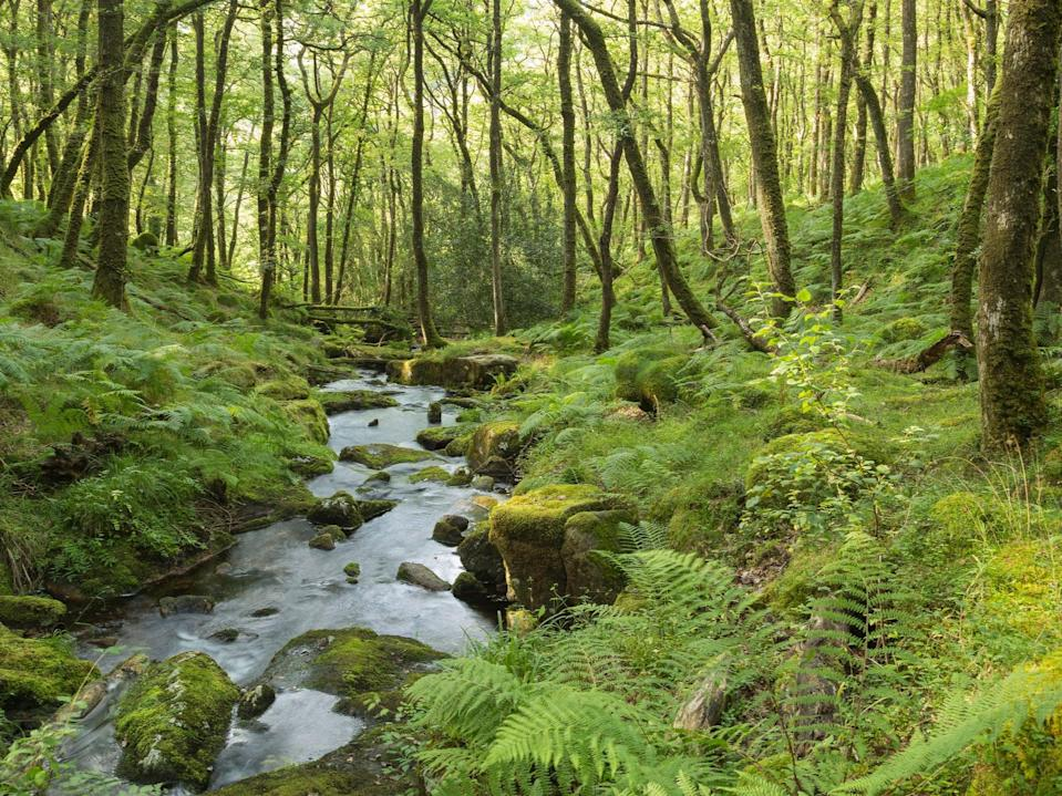 Forest in Dartmoor National Park, Devon. Just seven per cent of the UK's forests are in good ecological shape, according to a recent report (Getty)