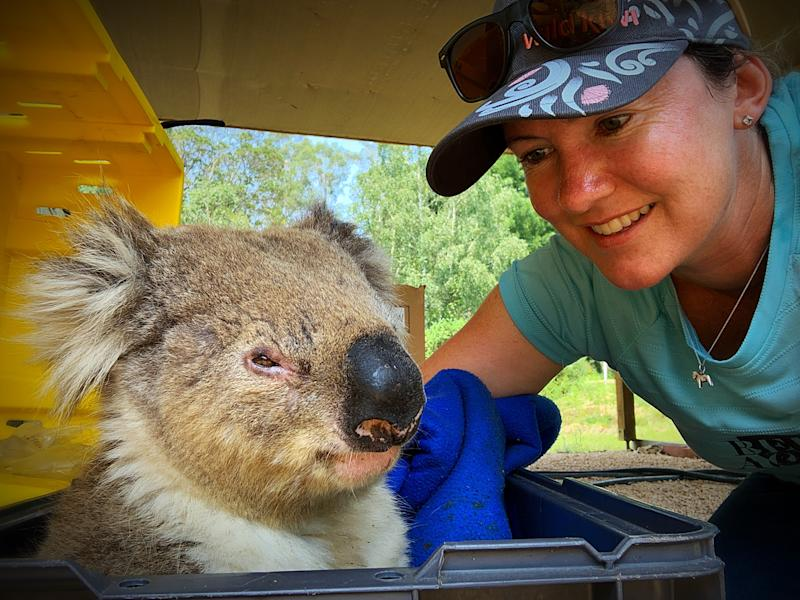 Close up of Dr Penman wearing a hat and a blue T-shirt with a koala which is in a box and looks unwell.