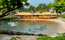 """<p>Parents nostalgic for fun-filled afternoons at summer camp can channel their pint-sized selves at <a href=""""http://www.hiltonwaikoloavillage.com/"""" rel=""""nofollow noopener"""" target=""""_blank"""" data-ylk=""""slk:this 62-acre resort"""" class=""""link rapid-noclick-resp"""">this 62-acre resort</a>. There are plenty of fun features: a turtle-filled saltwater lagoon, swimming pools with waterfalls, snorkeling and kayaking outings, and island-themed workshops in ukulele, lei making, and hula. The Legends of Hawaii Luau showcases fire dancers and conch-shell blowing, accompanied by a generous buffet. (Photo: Courtesy of Hilton)</p>"""
