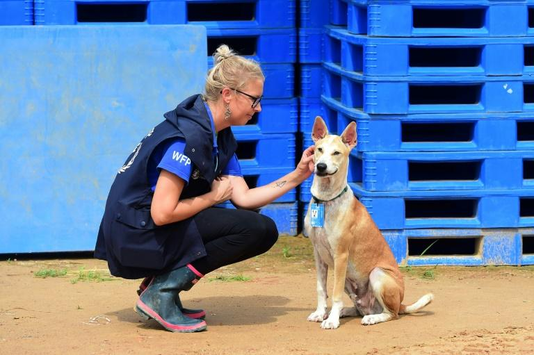 Foxtrot has his own Instagram account called 'humanitarian_pup' (AFP Photo/Munir UZ ZAMAN)