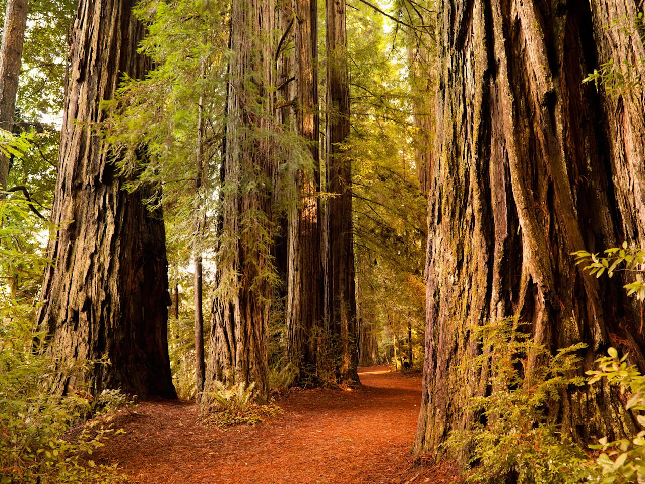 "<p><a href=""https://www.nps.gov/redw/index.htm"" rel=""nofollow"" target=""_blank"">Redwood National and State Parks</a> in northernmost coastal California inspired the setting for Planet Endor in <em>Star Wars: Episode VI – Return of the Jedi</em>. Perhaps the most memorable characters of the 1983 film were the Ewoks, who made their forest homes in groves of the world's tallest trees.</p> <p><strong>Getting there</strong><br> Redwood National and State Parks is a six-hour drive north from <a href=""https://www.cntraveler.com/destinations/san-francisco?mbid=synd_yahoo_rss"" target=""_blank"">San Francisco</a>. If <a href=""https://www.cntraveler.com/story/3-days-around-california-redwoods-russian-river-valley?mbid=synd_yahoo_rss"" target=""_blank"">road tripping on the 101 from San Francisco</a>, take some time to enjoy the journey: in the summertime, detour to Guerneville and float through the redwoods, down the Russian River; drive through a tree on the Avenue of the Giants in Humboldt County; or stroll through the Victorian seaport of Eureka—the entire city is a state historic landmark. If you'd rather skip the long drive, there are three airports within close proximity: Del Norte County Airport/Jack McNamara Field (CEC), Arcata-Eureka Airport (ACV), and Rogue Valley International-Medford Airport (MFR). Pick up a rental car at the airports to explore the parks.</p> <p><strong>Playing there</strong><br> Hundreds of miles of trails wind through the old-growth redwoods to the rugged coastline of Northern California. Regardless of how much time you have, there's a hike to fit that time frame. We'd start with <a href=""https://www.nps.gov/thingstodo/lbjgrove.htm"" rel=""nofollow"" target=""_blank"">Lady Bird Johnson Grove,</a> a 1.5-mile loop trail, to acquaint yourself with the park. According to the National Park Service, this trail is a ""popular first (or last) walk in the redwoods for visitors because it is on the southern end of the park."" Be sure to stop at one of the five <a href=""https://www.nps.gov/redw/planyourvisit/visitorcenters.htm"" rel=""nofollow"" target=""_blank"">information centers</a> along the length of the park for maps and rangers' intel.</p> <p><strong>Staying there</strong><br> Camping is the only overnight option within Redwood National and State Parks. Otherwise, neighboring communities offer plenty of choices when it comes to hotels, inns, and bed and breakfasts.</p>"
