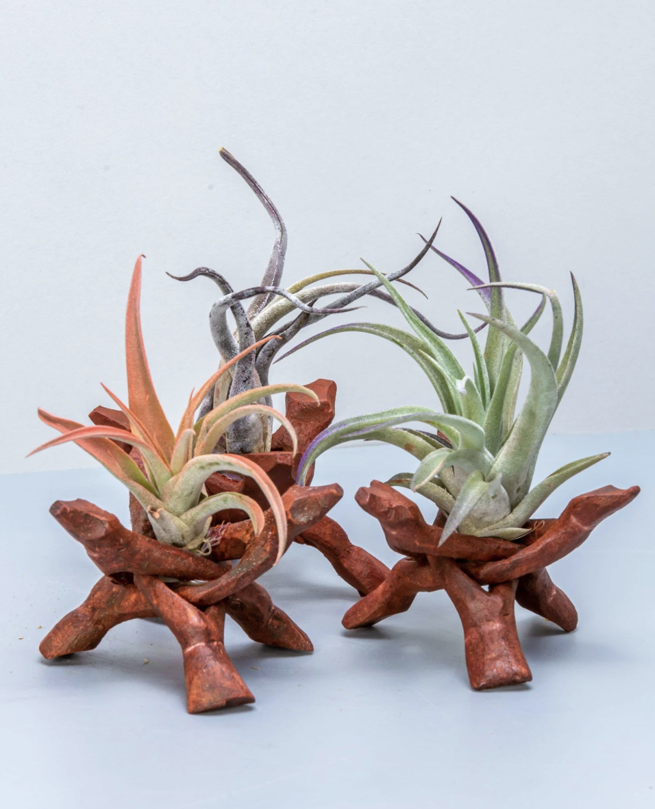 red, green, and purple air plants on wooded stands