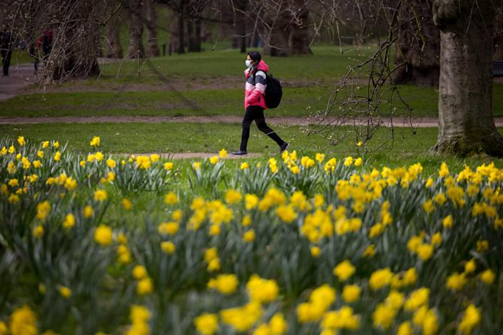 A woman wearing a face mask walks past daffodils in Green Park in central London (AFP/Getty)