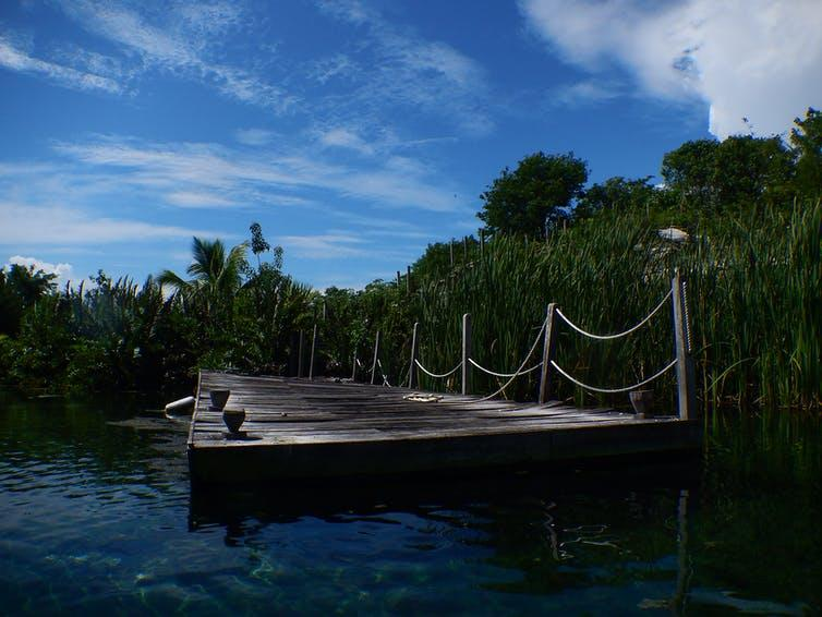 A floating jetty surrounding by mangrove swamp.