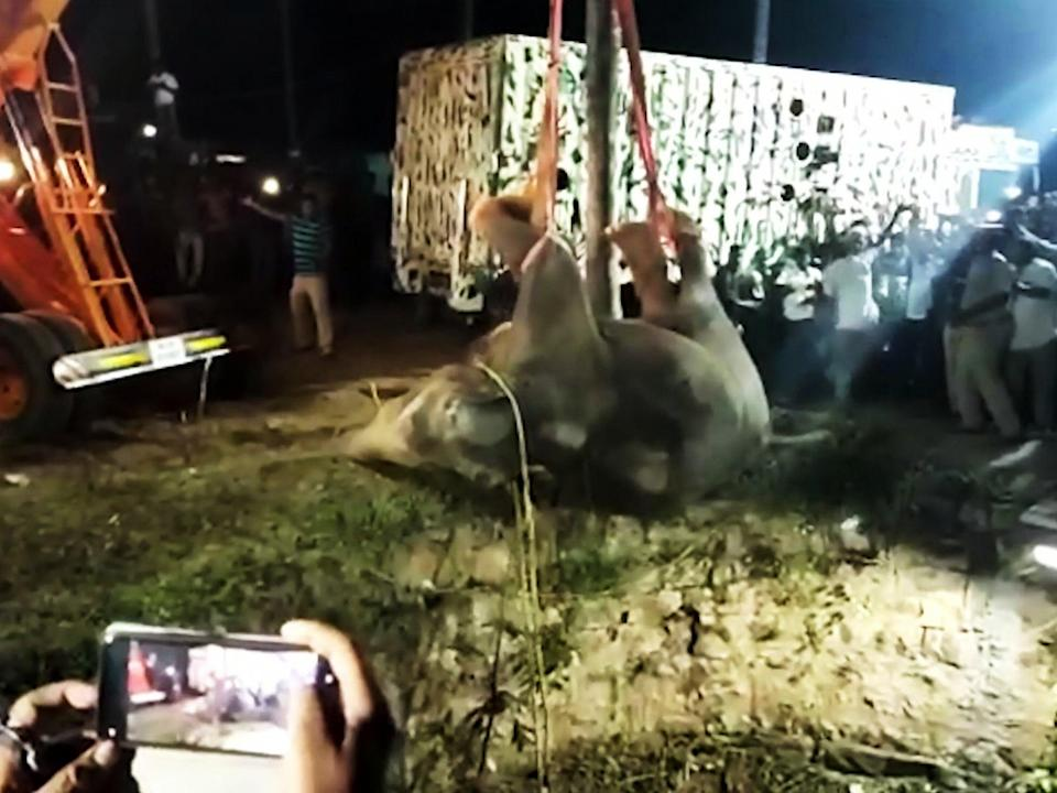 <p>The elephant fell 50 ft and was rescued by villagers in southern India.</p> (Newslions/SWNS)