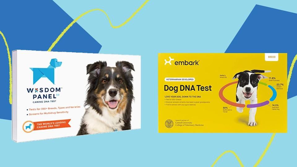"""We previously tested the two most popular dog DNA test kits,<a href=""""https://amzn.to/2qIohSv"""" target=""""_blank"""" rel=""""noopener noreferrer"""">Embark</a> and <a href=""""https://amzn.to/3377jMM"""" target=""""_blank"""" rel=""""noopener noreferrer"""">Wisdom Panel</a>. Now both are on sale. (Photo: HuffPost)"""