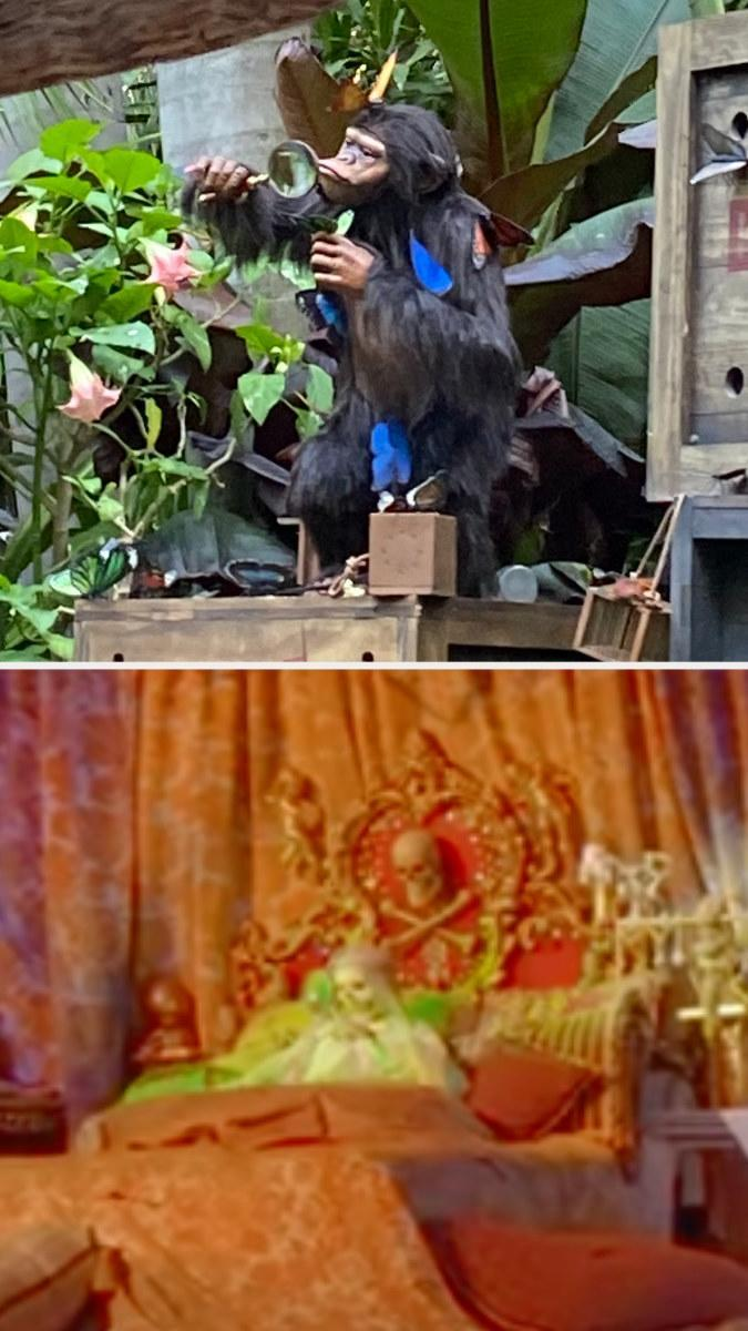 Chimp looking through magnifying glass in Jungle Cruise, and a skeleton looking through magnifying glass in Pirates of the Caribbean