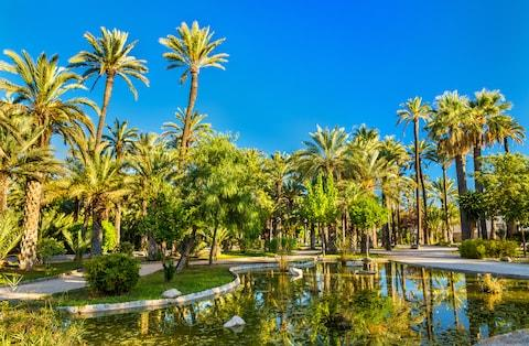 Elche boasts more than 200,000 date palm trees - Credit: GETTY