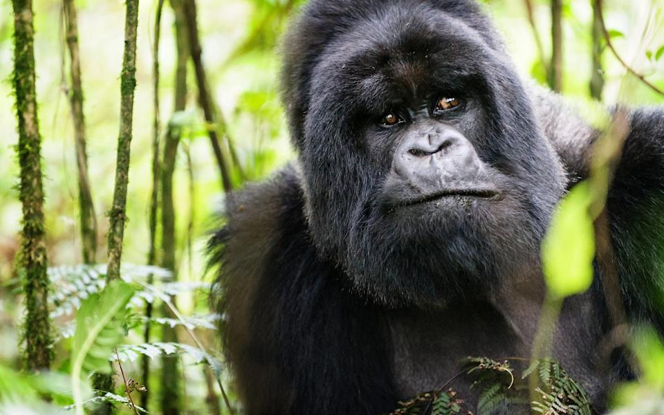 Rwanda is now on the list, and open to travellers - Getty