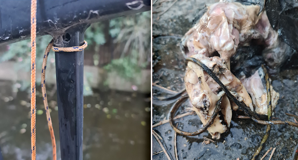 Cord tethered to the cage matched that which was wrapped around another possum's neck and head. Source: Supplied
