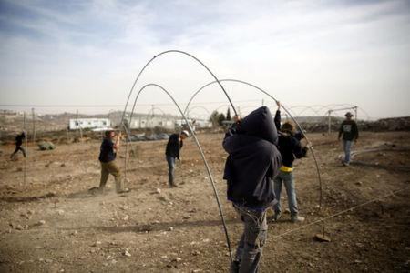 Israeli teenagers erect tent-frames as they prepare for an expected eviction of the Jewish settlement outpost of Amona in the West Bank, November 22, 2016. REUTERS/Ronen Zvulun
