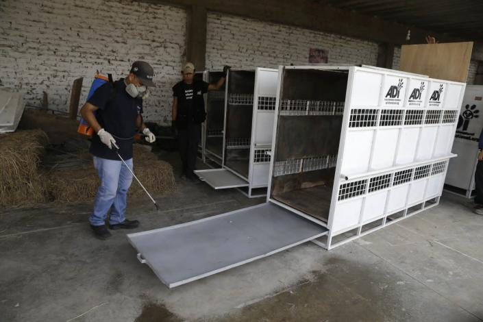 <p>Workers of Animal Defenders International disinfect several cages on the outskirts of Lima, Peru, that will be used to transport former circus lions to South Africa, on April 26, 2016.<i> (Martin Mejia/AP)</i></p>