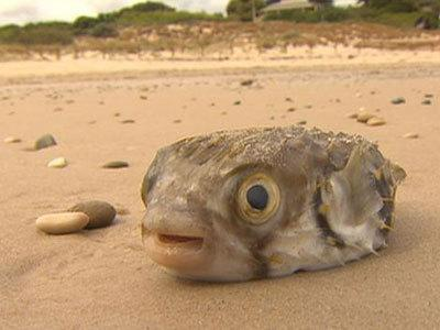 <p>Growing concerns over dead fish</p>