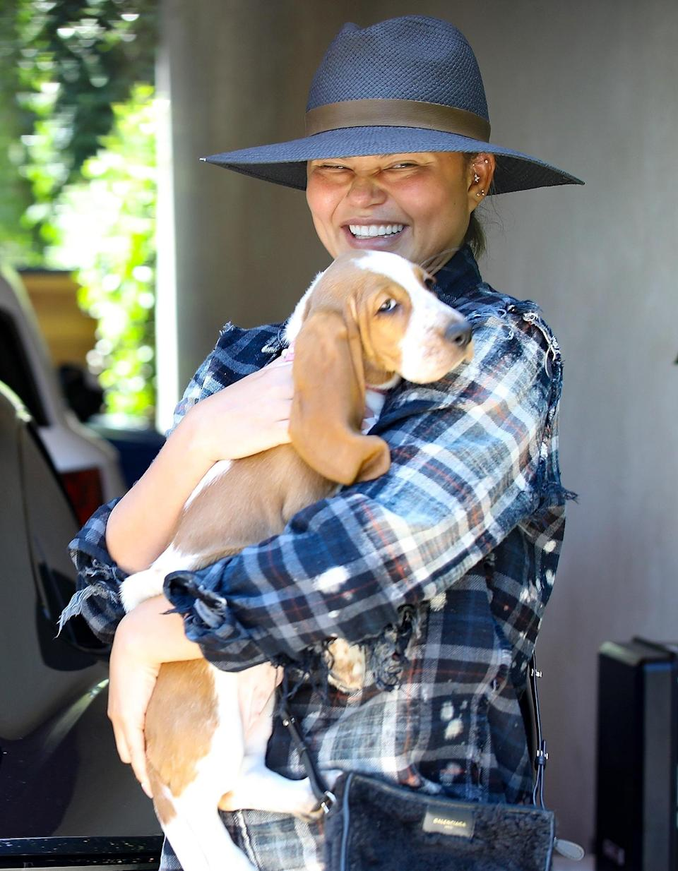 <p>Chrissy Teigen takes her new basset hound puppy Pearl to visit her office in Santa Monica on July 28.</p>