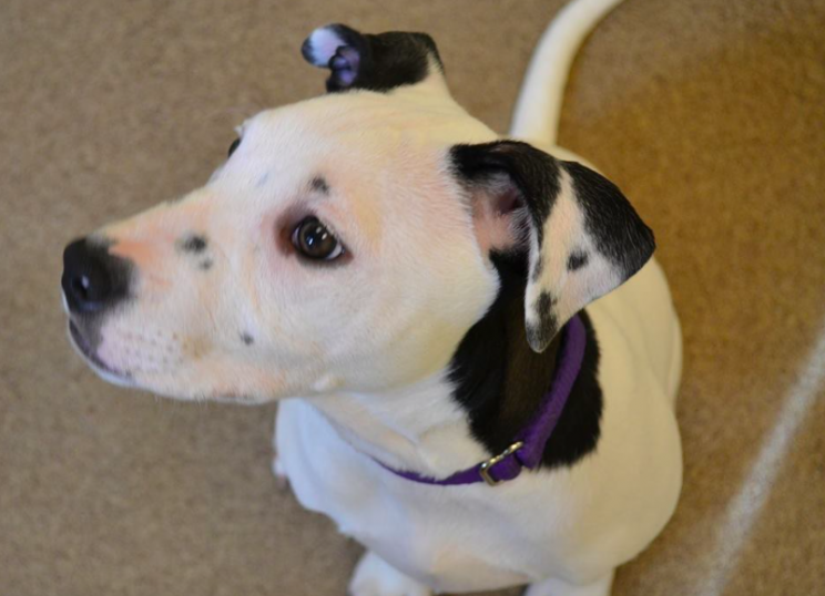 Lucy's selfie on her ear led to her being adopted (Lollypop Farm)