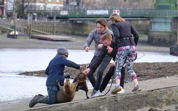 Furious animal lovers have hit out at a dog owner after the dog brutally attacked a young seal leaving him with a dislocated flipper and nasty wounds. - Duncan Phillips