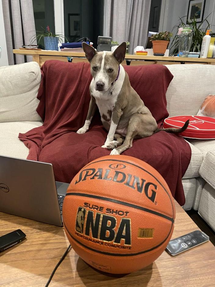 A pit bull sits near a TV and basketball. (Courtesy of Best Friends Animal Society)