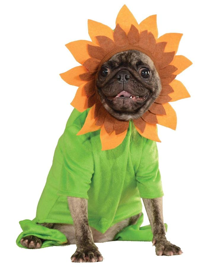 "<p>Hello darkness, my old friend...</p> <br> <br> <strong>Rubie's</strong> Sweet Sunflower Halloween Costume, $11.89, available at <a href=""https://www.walmart.com/ip/Sweet-Sunflower-Pet-Dog-Cat-Spring-Flower-Hoodie-Halloween-Costume/402894324"" rel=""nofollow noopener"" target=""_blank"" data-ylk=""slk:Walmart"" class=""link rapid-noclick-resp"">Walmart</a>"