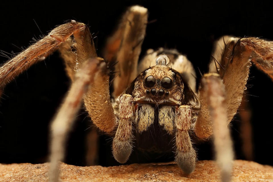 Plague of spiders in Australia as floodwaters force them to higher ground