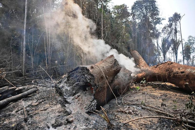 Smoke billows from the burning trunk of a tree in the surroundings of Porto Velho, Rondonia State, in the Amazon basin in west-central Brazil, on August 24, 2019