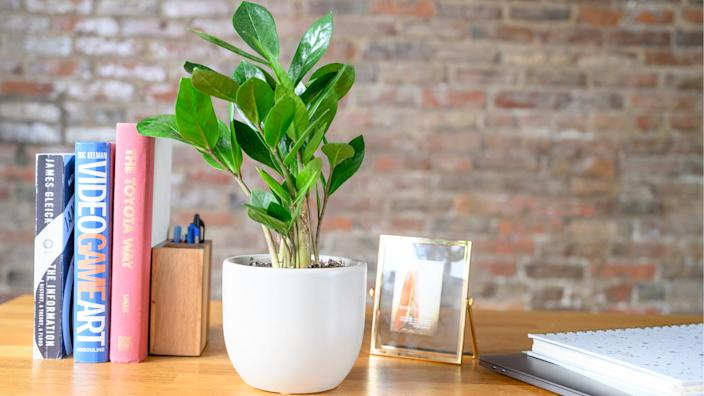 Gifts for teachers: The Sill plant delivery