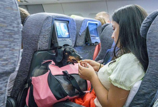 PHOTO: A passenger feeds a pet dog in its carrier. (Jeffrey Greenberg/Universal Images Group via Getty Images)