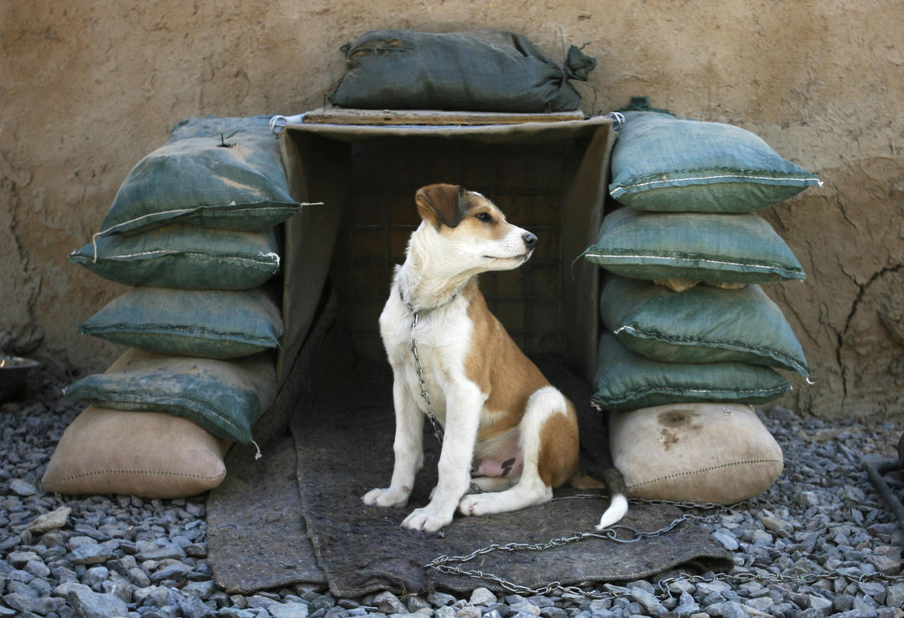 Shadow, an Afghan puppy owned by Canadian soldiers from the NATO-led coalition, sits in his sand-bagged kennel at Three Tank Hill base near Panjwaii town in Kandahar province, southern Afghanistan, October 27, 2007. REUTERS/Finbarr O'Reilly (AFGHANISTAN)