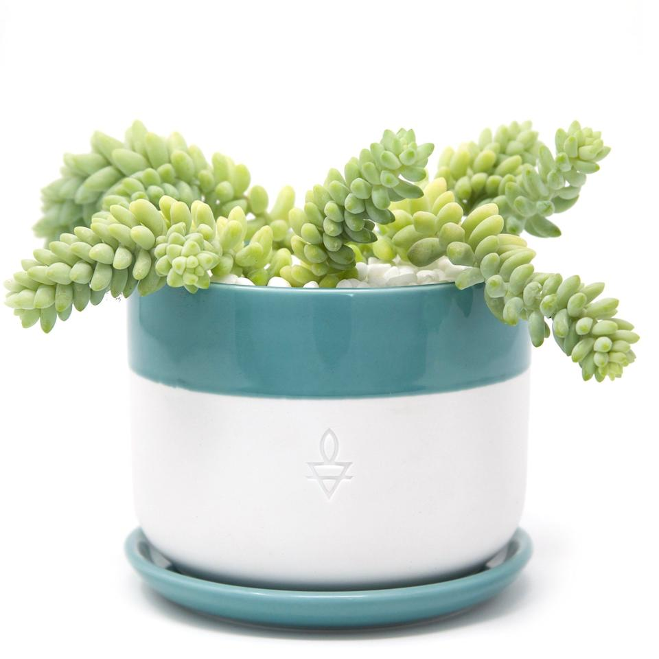 "<strong><h3>Leaf & Clay</h3></strong><br>Leaf & Clay sells an assorted variety of <a href=""https://leafandclay.co/collections/succulents"" rel=""nofollow noopener"" target=""_blank"" data-ylk=""slk:succulents"" class=""link rapid-noclick-resp"">succulents</a>, <a href=""https://leafandclay.co/collections/cactus"" rel=""nofollow noopener"" target=""_blank"" data-ylk=""slk:cacti"" class=""link rapid-noclick-resp"">cacti</a>, and <a href=""https://leafandclay.co/collections/succulent-pots"" rel=""nofollow noopener"" target=""_blank"" data-ylk=""slk:unique ceramic pots"" class=""link rapid-noclick-resp"">unique ceramic pots</a>. You can easily purchase one-off plants for a gift, variety packs for starting your own garden, or the monthly subscription for the succulent obsessed — the ""<a href=""https://leafandclay.co/products/the-monthly-plant-mail-club"" rel=""nofollow noopener"" target=""_blank"" data-ylk=""slk:Plant Mail Club"" class=""link rapid-noclick-resp"">Plant Mail Club</a>"" offers a curated succulent 3-pack per month for $15.95.<br><br><em>Visit <a href=""https://leafandclay.co/"" rel=""nofollow noopener"" target=""_blank"" data-ylk=""slk:Leaf & Clay"" class=""link rapid-noclick-resp"">Leaf & Clay</a>.</em>"