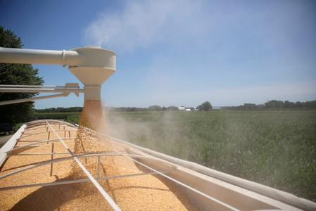 FILE PHOTO: Corn is loaded into a truck at a farm in Tiskilwa, Illinois