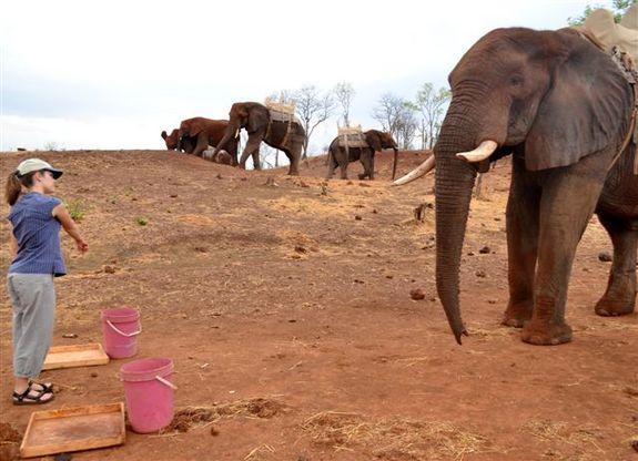 Elephants Understand Human Gesture, No Training Needed