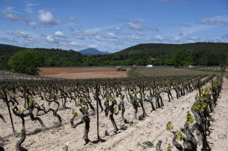 Global demand is rising for the rose wines produced in the dry and rugged hills of Provence.