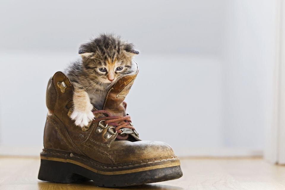 <p>Excuse me, sir, but how exactly did you get in that boot? </p>