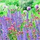 """<p>A cost effective way to fill flowerbeds with great looking plants is to buy perennials that you can divide. This may sound like advanced level gardening but really it isn't. It will work with clump-forming perennials such as geums, astrantia and hardy geraniums. </p><p>Simply tip the plant out of its pot and pull it apart into two or three bits, each with some stalks and root. Dig a hole and plant each part in your flowerbed. Next year when they've grown and spread, you can dig them up and pull them apart again to gain even more plants. </p><p>You'll get a wonderful display in a couple of years for very little cash. Six geranium plants are usually enough to get going in an average sized garden.</p><p><a class=""""link rapid-noclick-resp"""" href=""""https://go.redirectingat.com?id=127X1599956&url=https%3A%2F%2Fwww.crocus.co.uk%2Fplants%2F_%2Fperennials%2Fplcid.2%2Fnumitems.100%2Fcanorder.1%2F&sref=https%3A%2F%2Fwww.redonline.co.uk%2Finteriors%2Feditors_choice%2Fg35933369%2Fgarden-ideas-on-a-budget%2F"""" rel=""""nofollow noopener"""" target=""""_blank"""" data-ylk=""""slk:Shop a wide selection of perennial plants at Crocus"""">Shop a wide selection of perennial plants at Crocus </a></p>"""