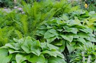 """<p>In shady spots, replacing grass with no-fuss stone makes more sense than growing a patchy lawn. For lush foliage in your remaining beds, hostas, sedges, and ferns thrive with minimal sun.</p><p><a href=""""https://www.goodhousekeeping.com/home/gardening/a20707010/growing-hostas/"""" rel=""""nofollow noopener"""" target=""""_blank"""" data-ylk=""""slk:RELATED: How to Grow the Most Stunning Hostas"""" class=""""link rapid-noclick-resp""""><strong>RELATED: </strong>How to Grow the Most Stunning Hostas</a></p>"""