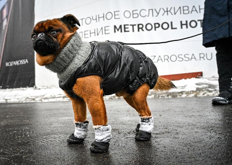 Pet owners in Moscow say they try to prevent their pets coming into contact with the snow salt used on the streets (AFP Photo/Mladen ANTONOV)