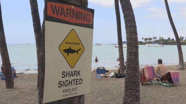 California Tourist, 65, Dies in Apparent Shark Attack During Hawaii Vacation
