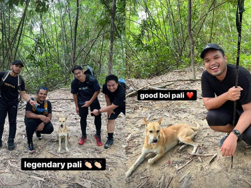 Meet Pali the dog who became a personal hiking guide for a group of Malaysian men. — Photo courtesy of Instagram/khairulaming