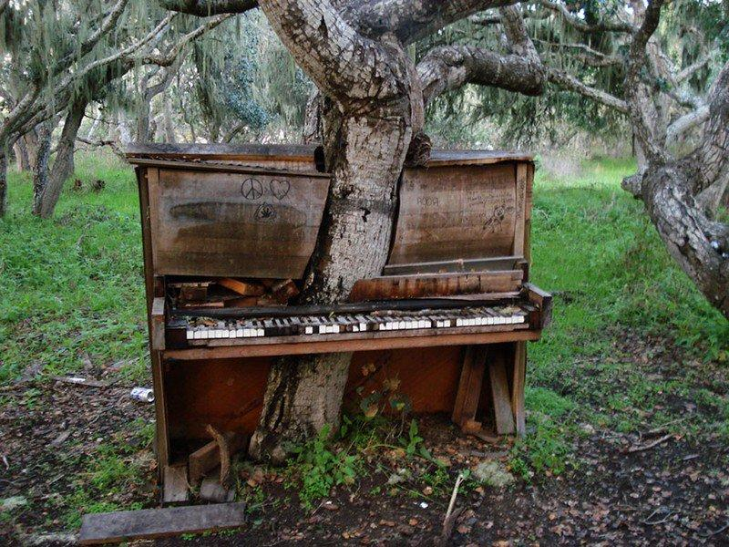 <p>El árbol del viejo piano en California (Foto: Creative Commons). </p>