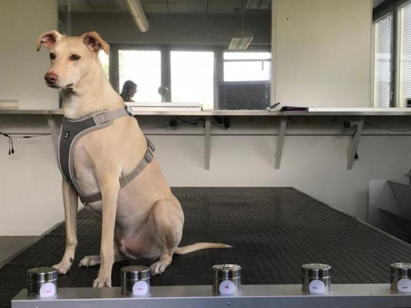 One of Wise Nose's coronavirus sniffer dogs (Finavia)