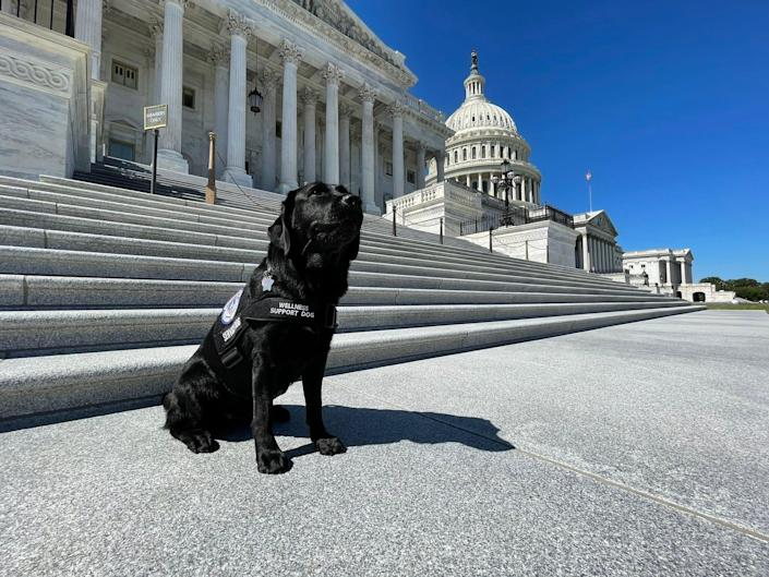 Lila Capitol Police support dog