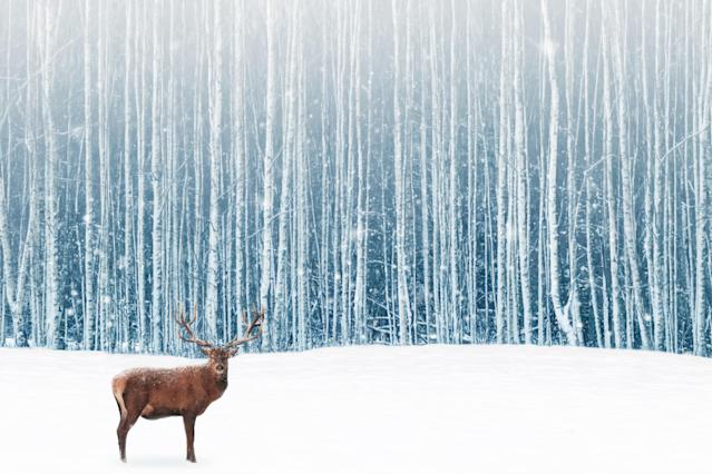 Deer male with big horns in the winter snowy forest. Winter natural background. Christmas artistic image.