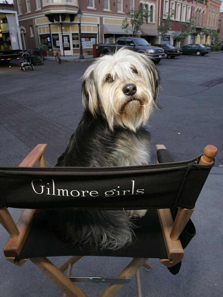 UNSPECIFIED - MAY 08:  Full BTS shot of dog/Paul Anka sitting on director's chair on outdoor set.  (Photo by Scott Humbert/Warner Bros./Getty Images)