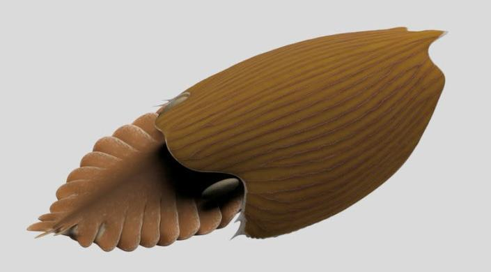 A reconstruction viewed from the side of the Cambrian Period arthropod Titanokorys gaines