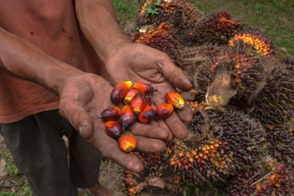 A palm oil farmer displaying palm oil seeds in Riau province, Indonesia, in August.  (Photo: WAHYUDI via Getty Images)