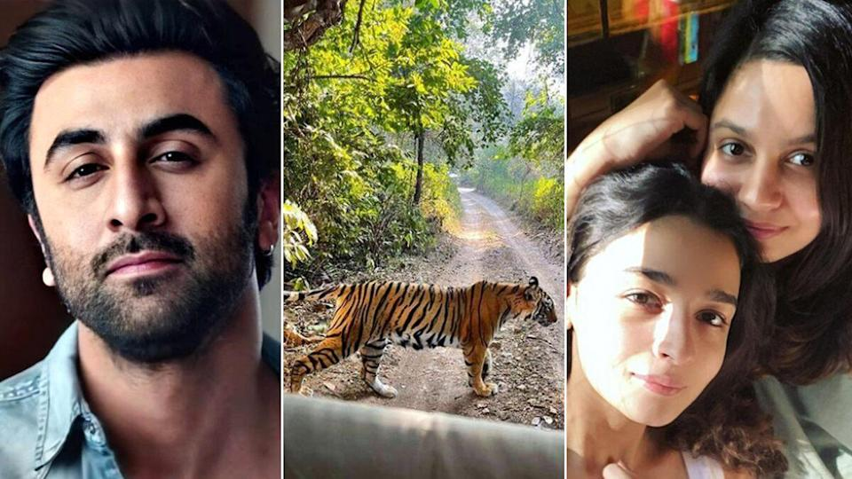 Ranbir Kapoor Is A Brilliant Wildlife Photographer And This Picture Shared By Alia Bhatt's Sister Shaheen From Their Ranthambore Trip Is Enough To Prove!