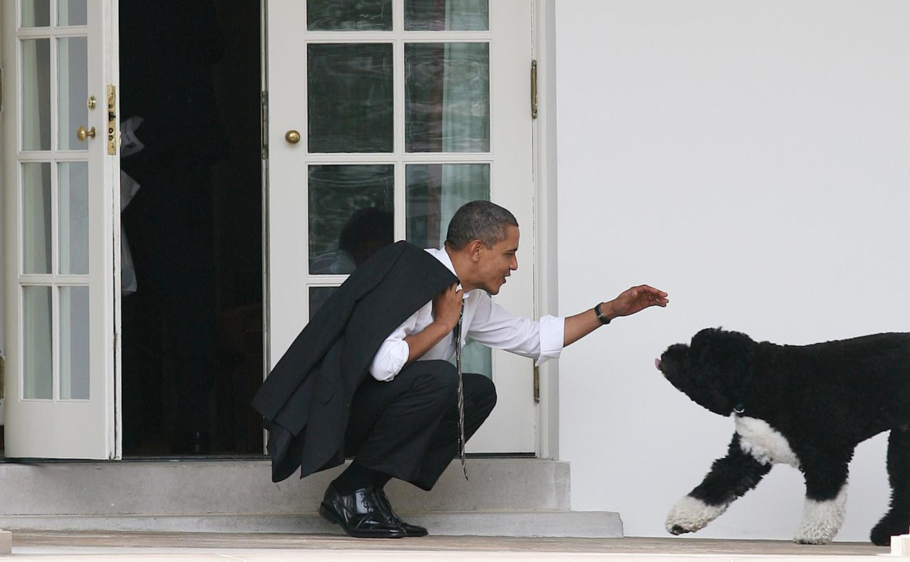 U.S. President Barack Obama greets his dog Bo outside the Oval Office of the White House March 15, 2012 in Washington, DC. Obama spoke today at Prince Georges Community College about energy.  (Photo by Martin H. Simon-Pool/Getty Images)