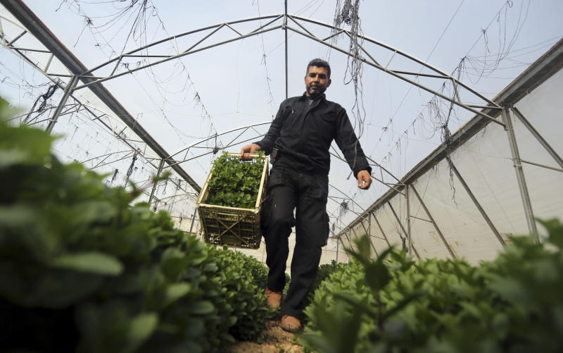 Growing herbs a remedy for some Gaza economic woes